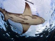 Фотопечать на потолке: Подводный мир (138)