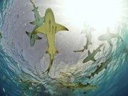Фотопечать на потолке: Подводный мир (139)