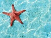 Фотопечать на потолке: Подводный мир (84)