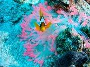 Фотопечать на потолке: Подводный мир (94)