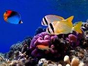 Фотопечать на потолке: Подводный мир 10