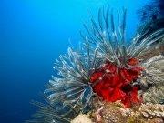 Фотопечать на потолке: Подводный мир 14