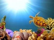 Фотопечать на потолке: Подводный мир 19