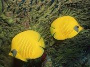 Фотопечать на потолке: Подводный мир 24