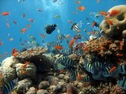 Фотопечать на потолке: Подводный мир 27