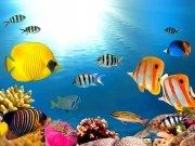Фотопечать на потолке: Подводный мир 3