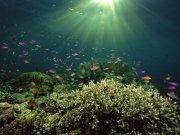 Фотопечать на потолке: Подводный мир 32