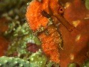 Фотопечать на потолке: Подводный мир 46