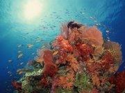 Фотопечать на потолке: Подводный мир 49