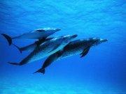 Фотопечать на потолке: Подводный мир 5