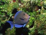 Фотопечать на потолке: Подводный мир 51