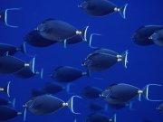 Фотопечать на потолке: Подводный мир 59