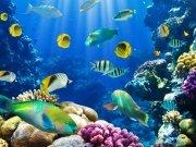 Фотопечать на потолке: Подводный мир 6