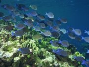Фотопечать на потолке: Подводный мир 60