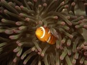 Фотопечать на потолке: Подводный мир 65