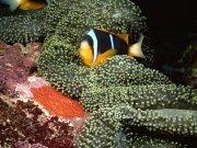 Фотопечать на потолке: Подводный мир 70