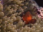 Фотопечать на потолке: Подводный мир 72