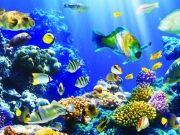 Морское дно с разнообразной флорой и фауной, изображение 1