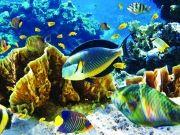 Флора и фауна морских глубин, изображение 2
