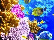 Солнечный свет пробивается сквозь толщи морских вод, освещая морскую флору и фауну, Дельфин на гребне волны, изображение 3