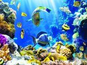 Морские глубины, населенные разноцветными рыбками и кораллами, Дельфин на гребне волны, изображение 4