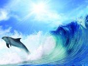 Дельфин на гребне волны, изображение 5