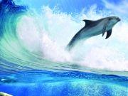 Плывущие дельфины, изображение 6