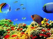 Морские глубины с полосатыми рыбками и кораллами, изображение 7