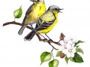 птицы (59)
