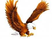 птицы (60)