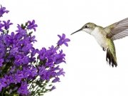 птицы (61)