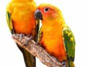 птицы (66)