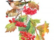 птицы (74)