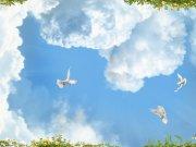 птицы (79_1)
