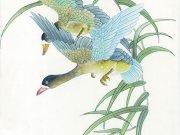 Фотопечать на потолке: Птицы 11