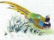 Фотопечать на потолке: Птицы 12