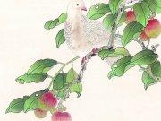 Фотопечать на потолке: Птицы 3