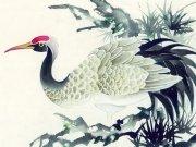 Фотопечать на потолке: Птицы 30