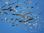 Фотопечать на потолке: Птицы 48