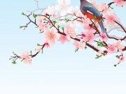Фотопечать на потолке: Птицы 51