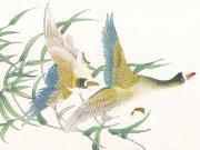 Фотопечать на потолке: Птицы 9