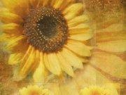 Фотопечать на потолке: Текстуры 10