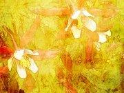 Фотопечать на потолке: Текстуры 41