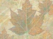 Фотопечать на потолке: Текстуры 6