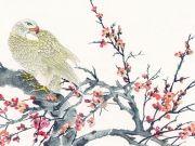 Орел, чистящий перья на ветке цветущей сакуры, изображение 7