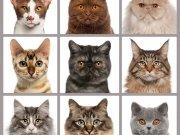 животные (60)