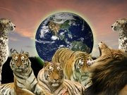Фотообои на стену: Животные 3