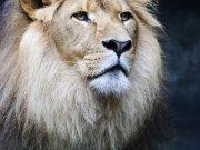 Фотообои на стену: Животные 10