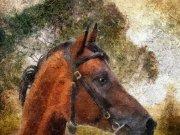 Фотообои на стену: Животные 12