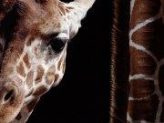 Фотообои на стену: Животные 16